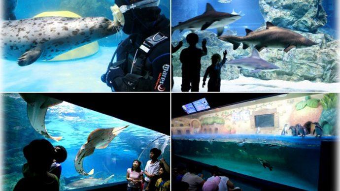 things to see in seoul coex aquarium