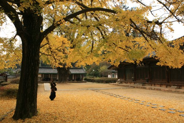 Jeonju Hyanggyo Confucian School